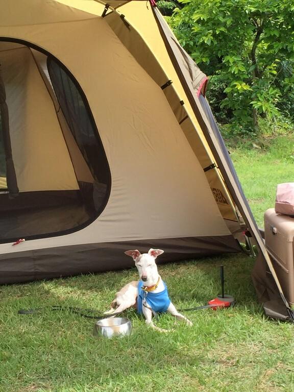 やまぼうしオートキャンプ場 の写真p5626